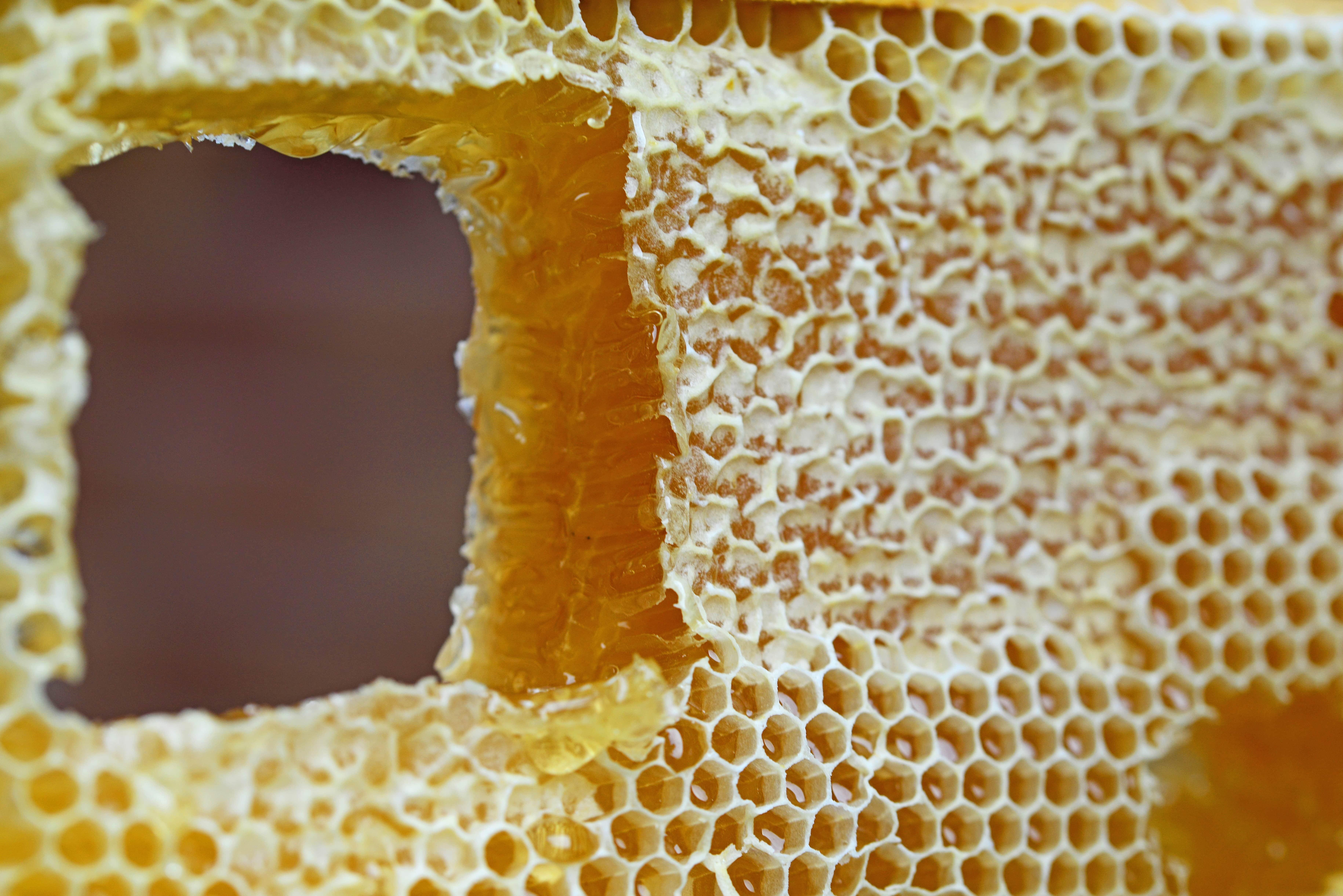 Ложка мёда