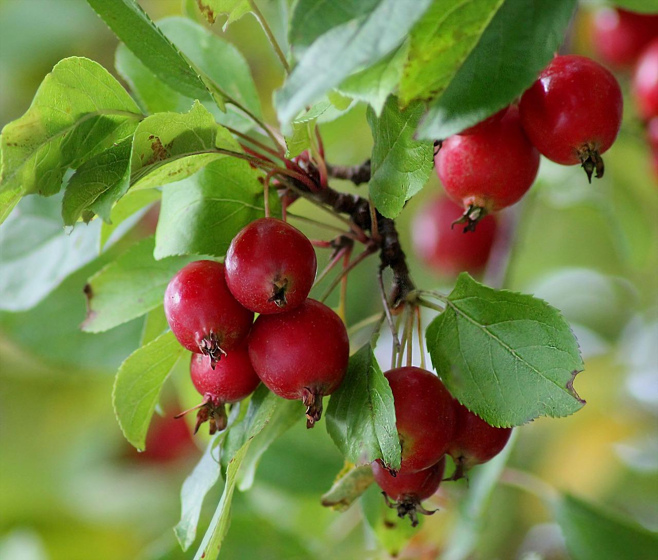 Запретные плоды