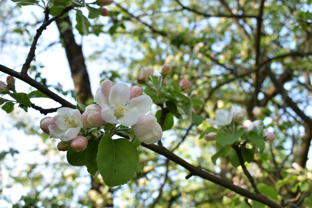 Хоть веточку яблони, хоть горстку тёплой земли (Часть 1)