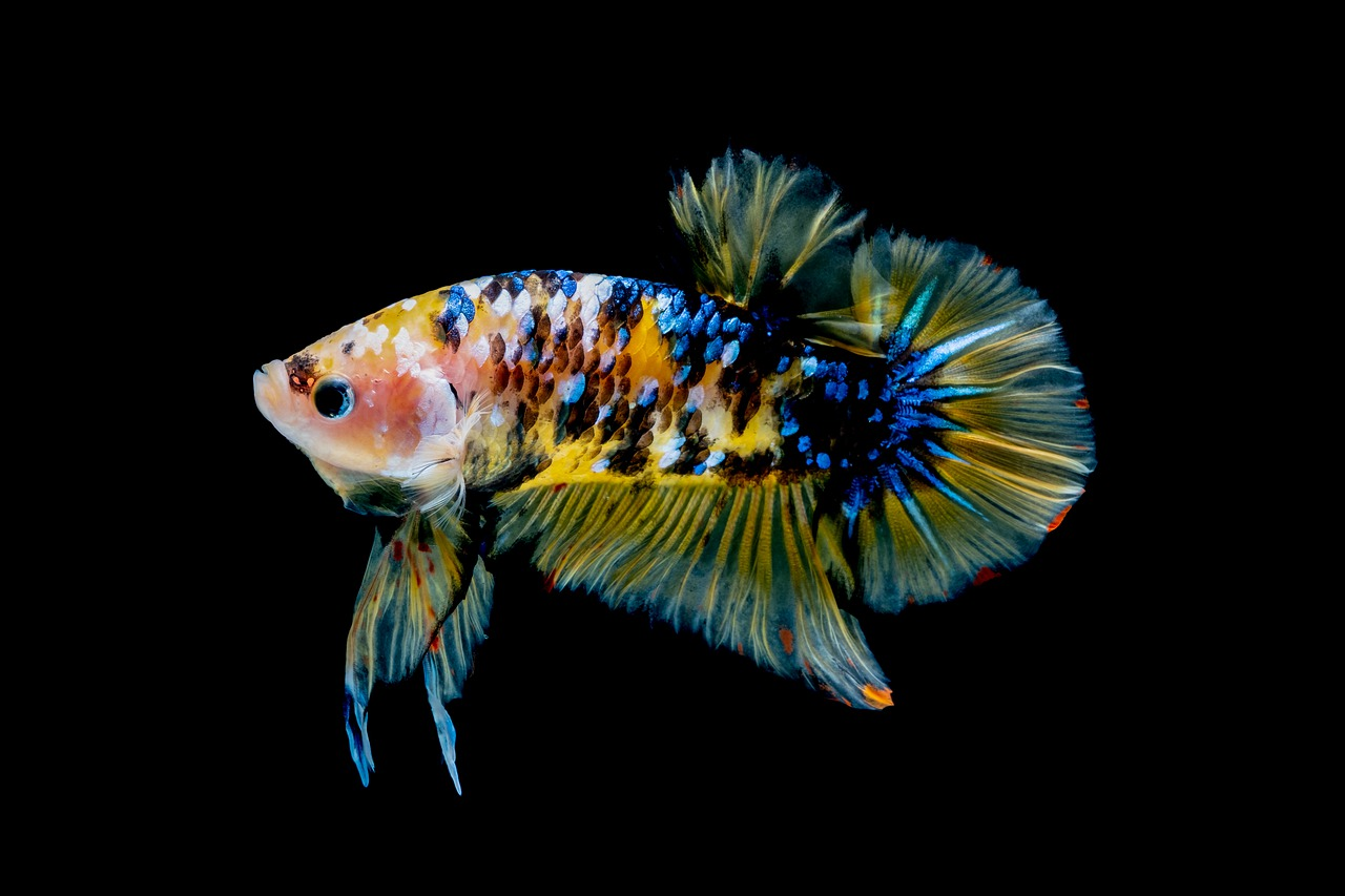 Рыбка по имени Марли (окончание)
